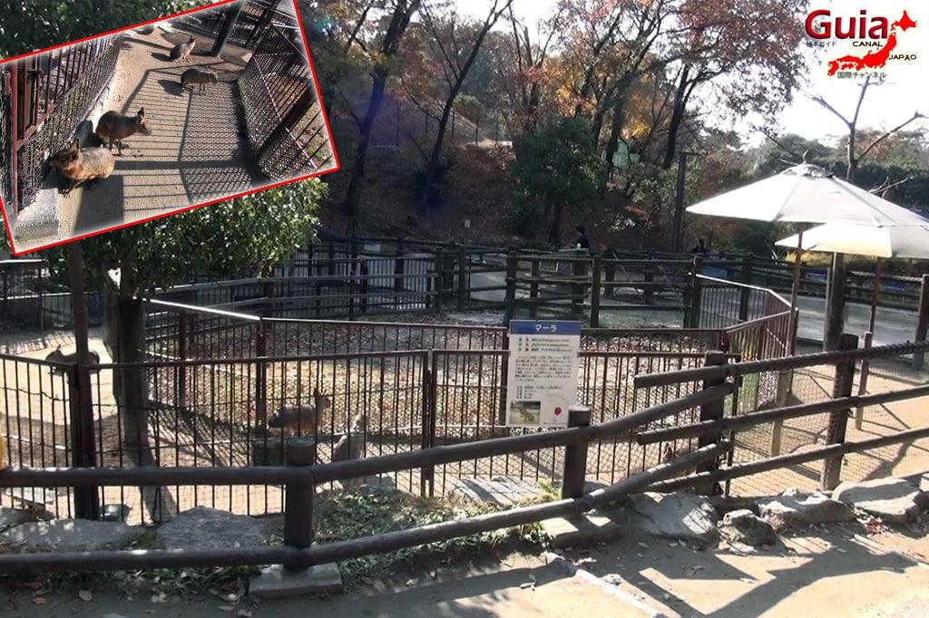 Okazaki East Park - Higashi Koen y 5 Zoo