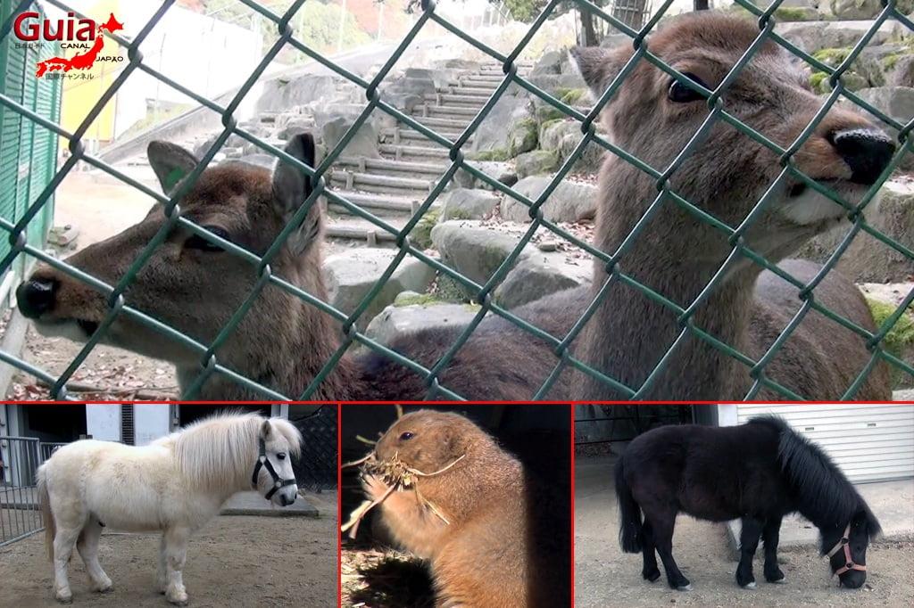 Okazaki East Park - Higashi Koen y 4 Zoo