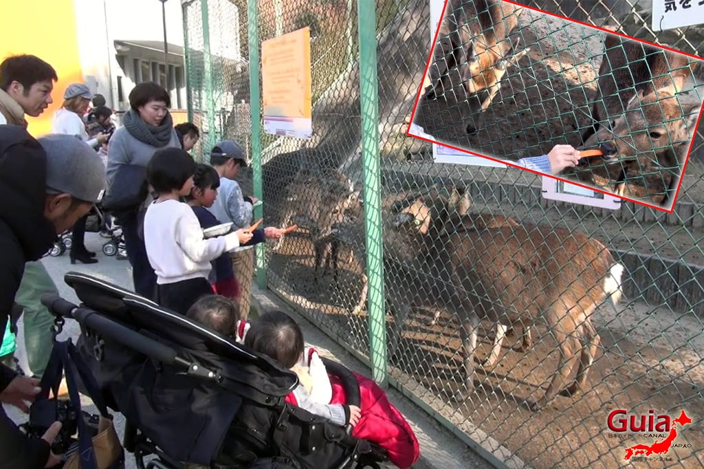 Okazaki East Park - Higashi Koen y 14 Zoo