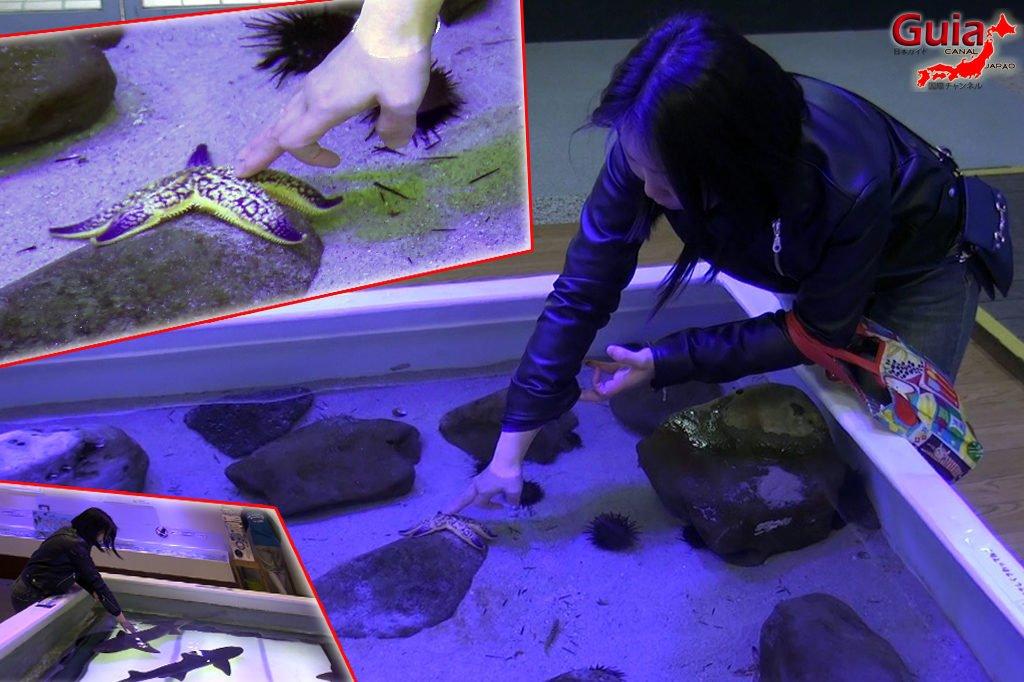Minami Chita Beach Land Aquarium / Taman Hiburan Toy Kingdom 14