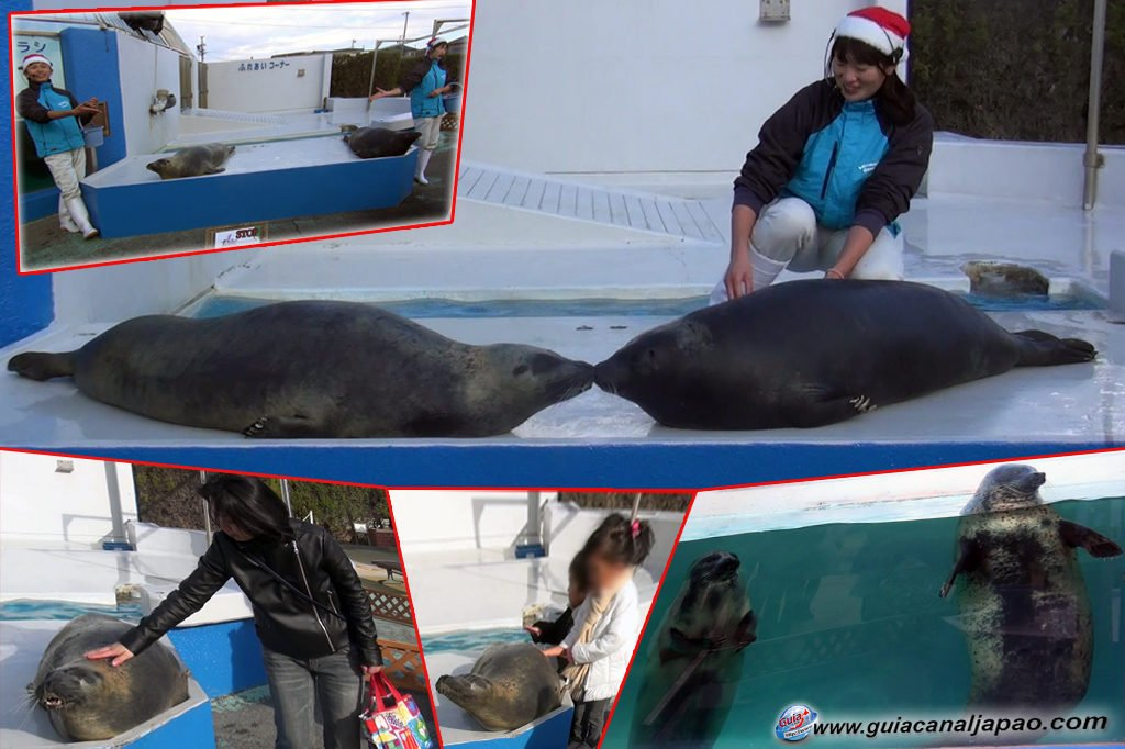 Minami Chita Beach Land Aquarium / Taman Hiburan Toy Kingdom 12