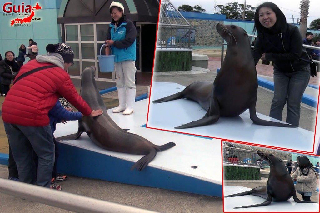 Minami Chita Beach Land Aquarium / Taman Hiburan Toy Kingdom 9