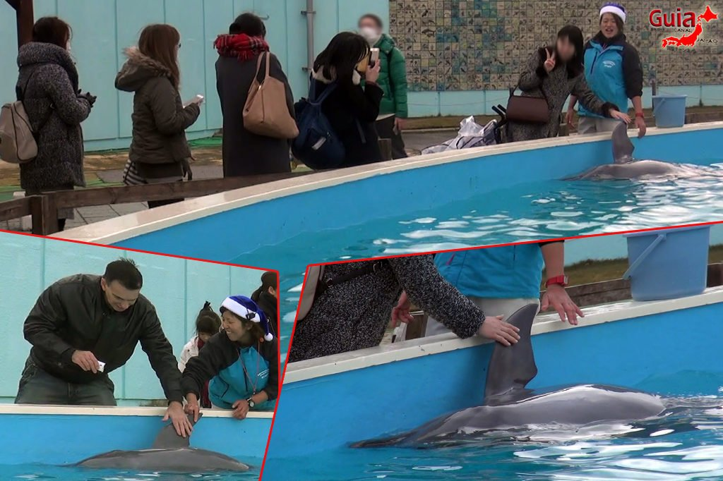 Minami Chita Beach Land Aquarium / Taman Hiburan Toy Kingdom 7
