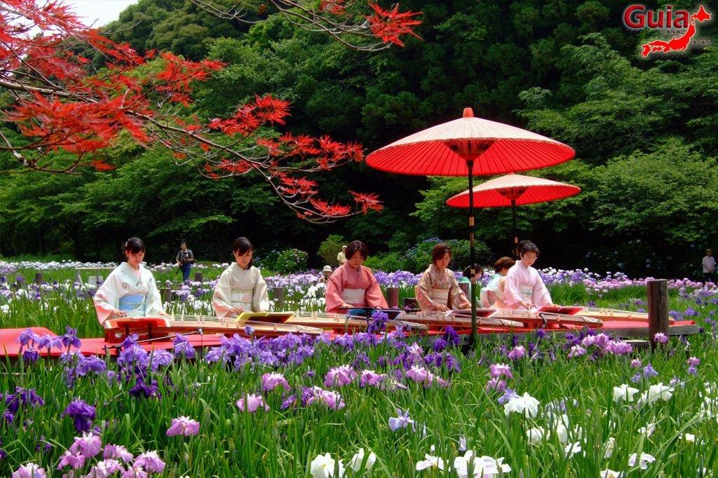 Parque de flores Hamamatsu - Parque de flores 13