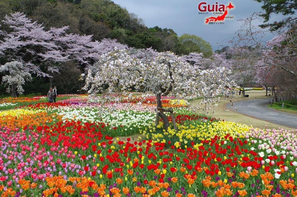 Parque de flores Hamamatsu - Parque de flores 24
