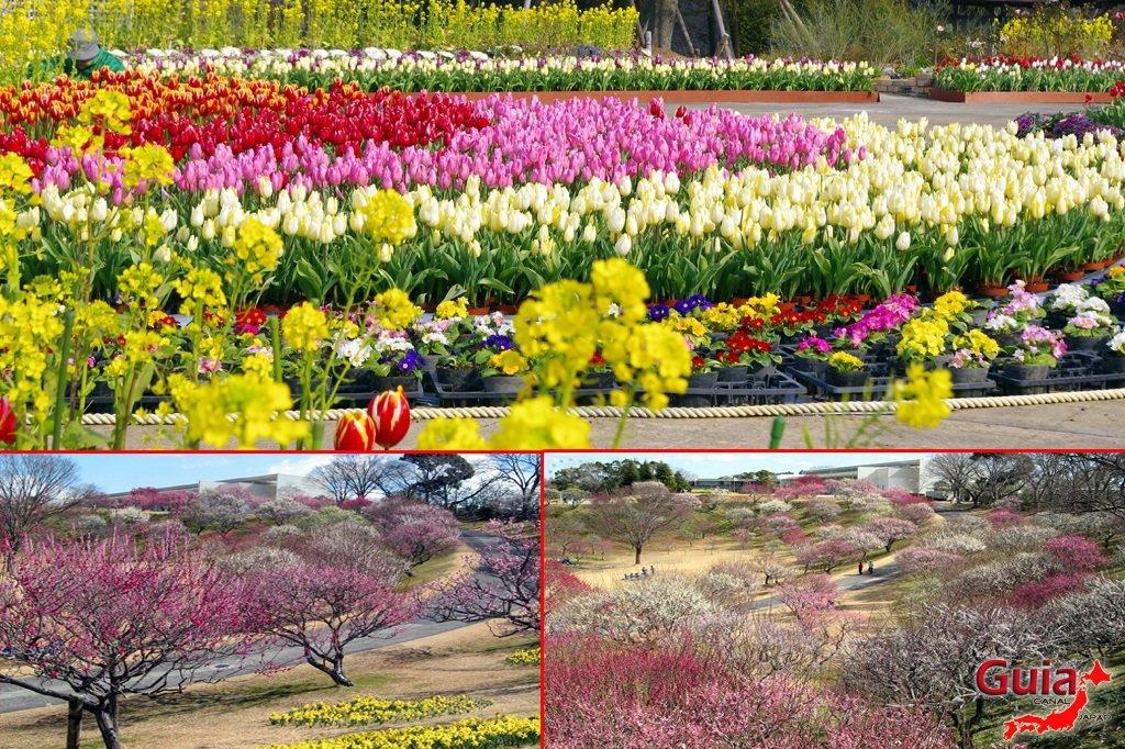 Parque de flores Hamamatsu - Parque de flores 26
