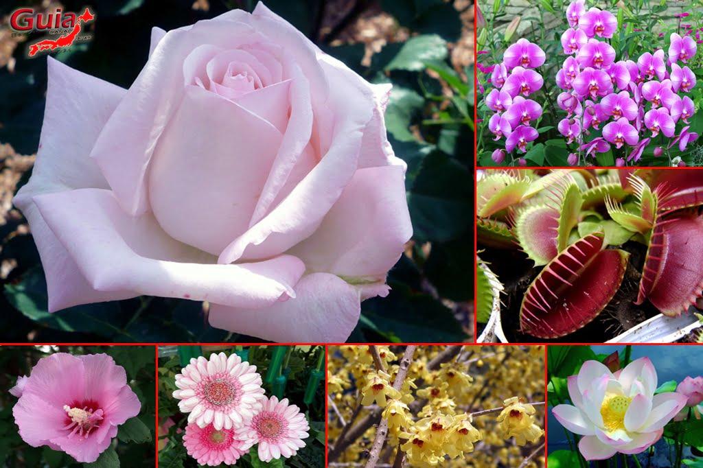 Parque de flores Hamamatsu - Parque de flores 11