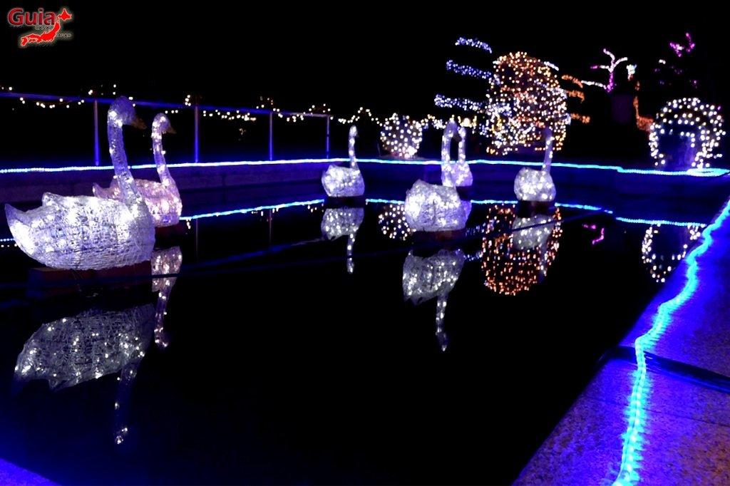 Цветочный парк Хамамацу 19 Lighting