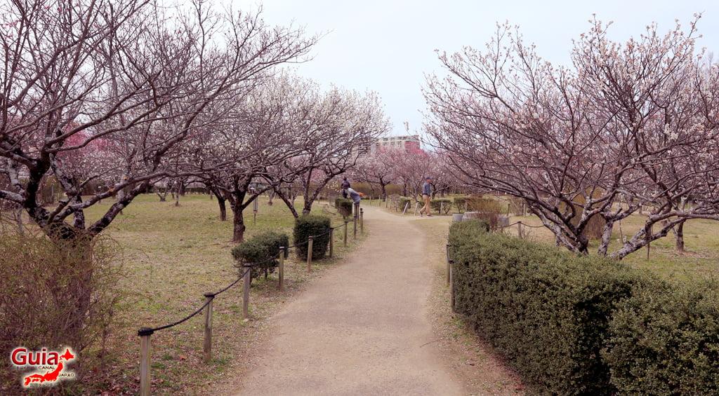 Parque Hirashiba - Ume (Festival de la flor del ciruelo) 11
