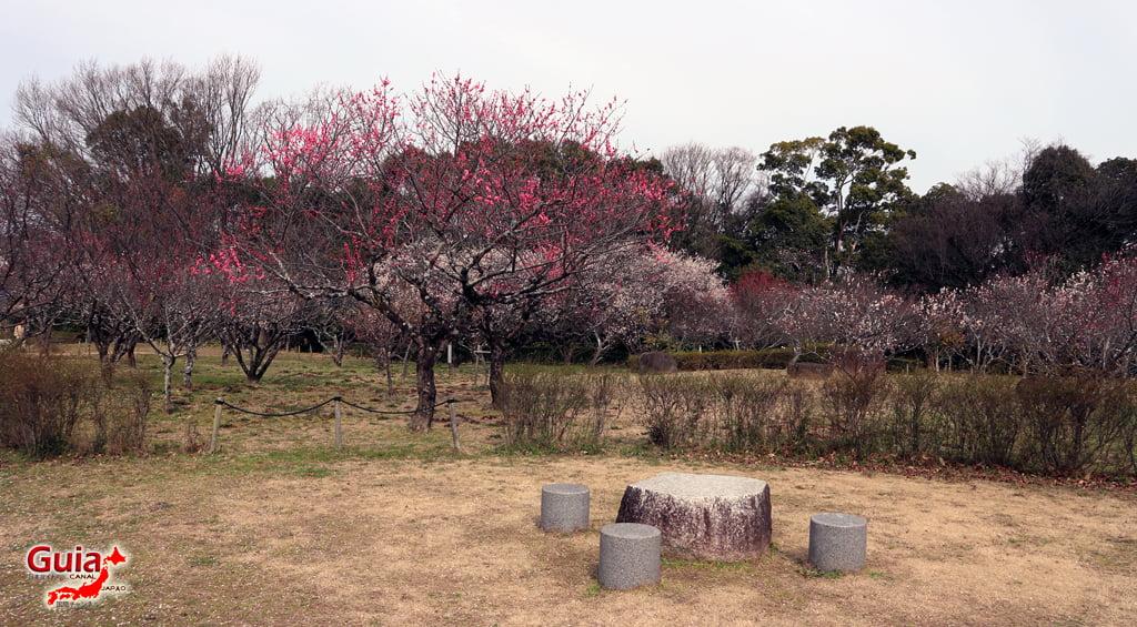 Parque Hirashiba - Ume (Festival de la flor del ciruelo) 12