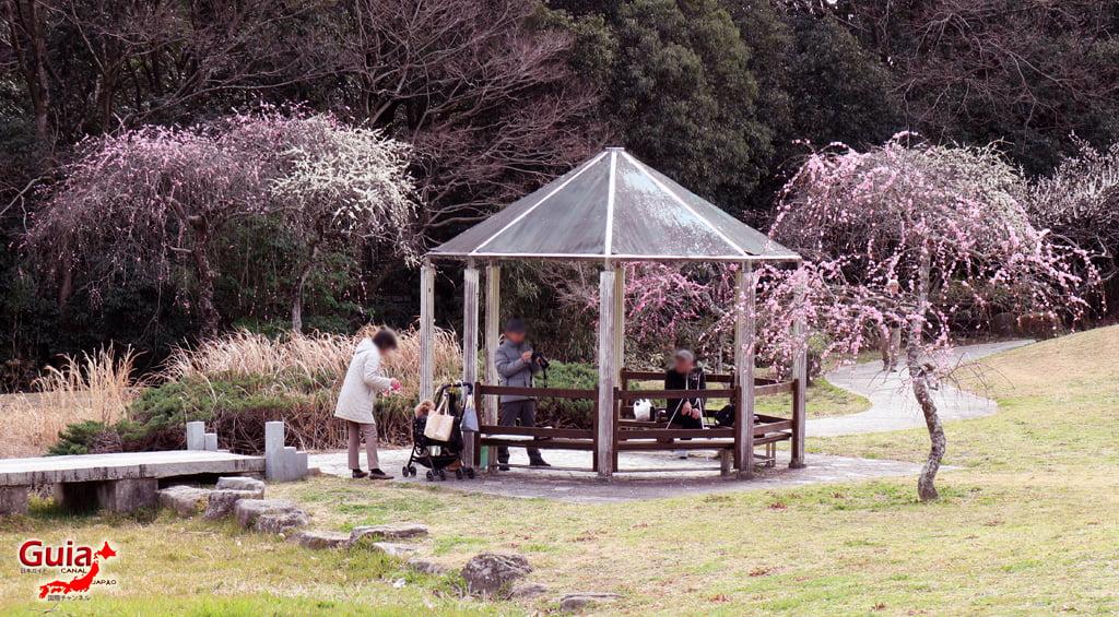 Hirashiba Park - Ume (Plum Blossom Festival) 13