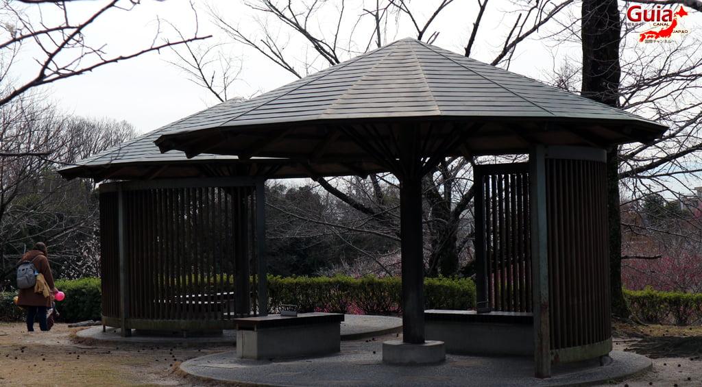Parque Hirashiba - Ume (Festival de la flor del ciruelo) 14
