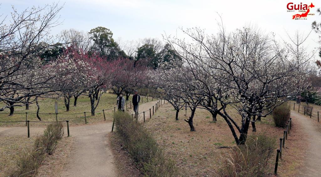 Parque Hirashiba - Ume (Festival de la flor del ciruelo) 15