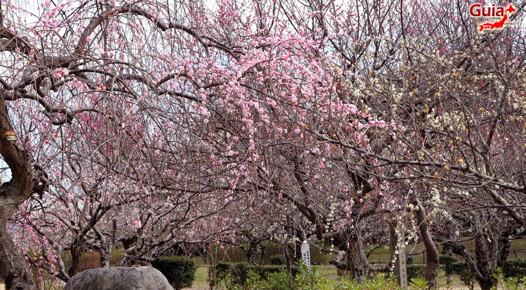 Parque Hirashiba - Ume (Festival de la flor del ciruelo) 18