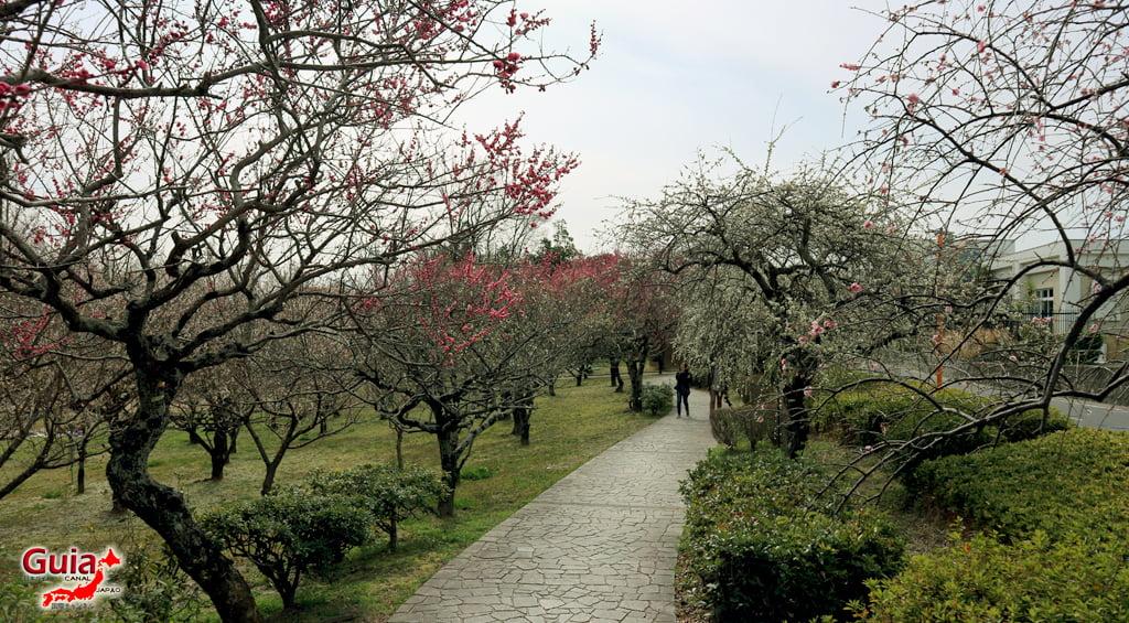 Parque Hirashiba - Ume (Festival de la flor del ciruelo) 20