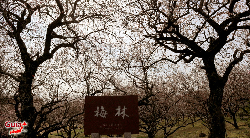 Parque Hirashiba - Ume (Festival de la flor del ciruelo) 3