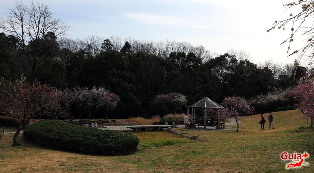 Parque Hirashiba - Ume (Festival de la flor del ciruelo) 21