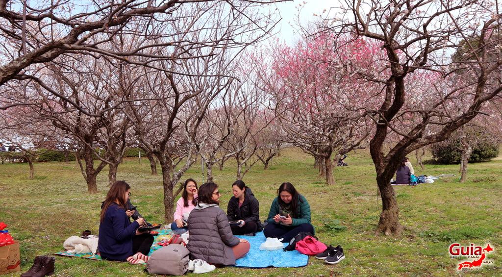 Parque Hirashiba - Ume (Festival de la flor del ciruelo) 22