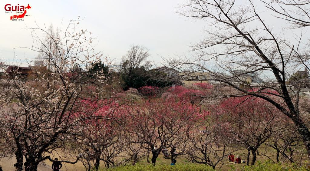 Parque Hirashiba - Ume (Festival de la flor del ciruelo) 23