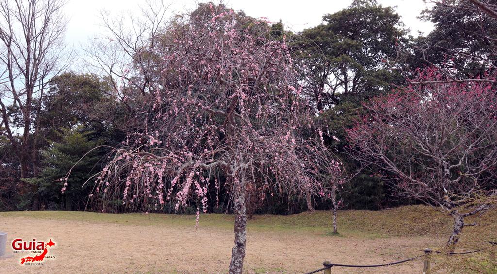 Hirashiba Park - Ume (Plum Blossom Festival) 24