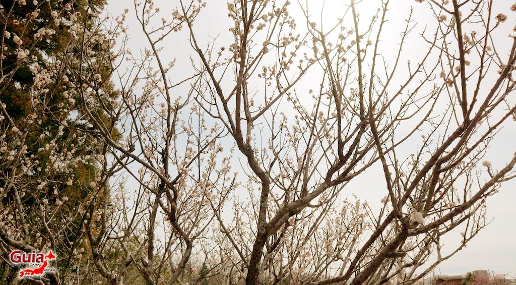 Parque Hirashiba - Ume (Festival de la flor del ciruelo) 27