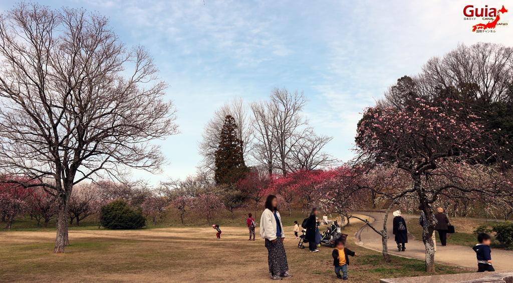 Parque Hirashiba - Ume (Festival de la flor del ciruelo) 4