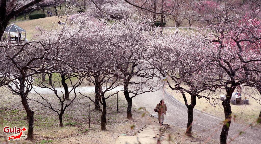 Parque Hirashiba - Ume (Festival de la flor del ciruelo) 5