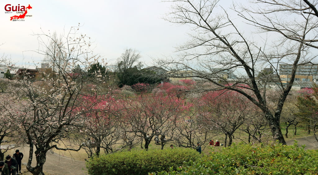 Parque Hirashiba - Ume (Festival de la flor del ciruelo) 7