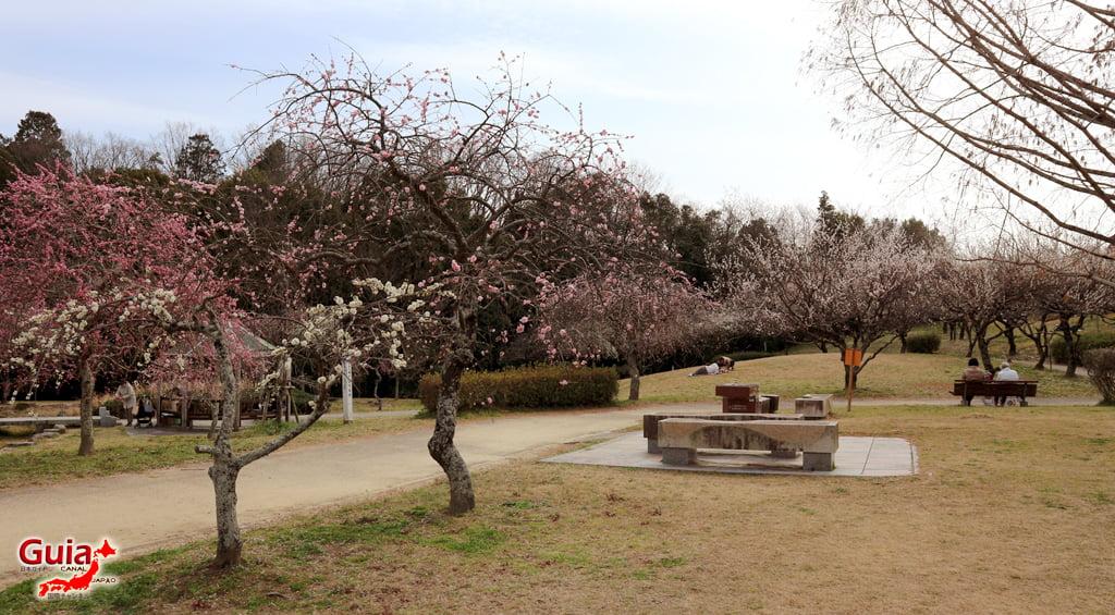 Hirashiba Park - Ume (Plum Blossom Festival) 10