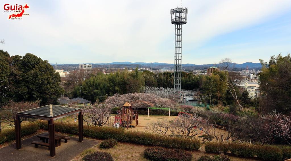Parque Hirashiba - Ume (Festival de la flor del ciruelo) 29