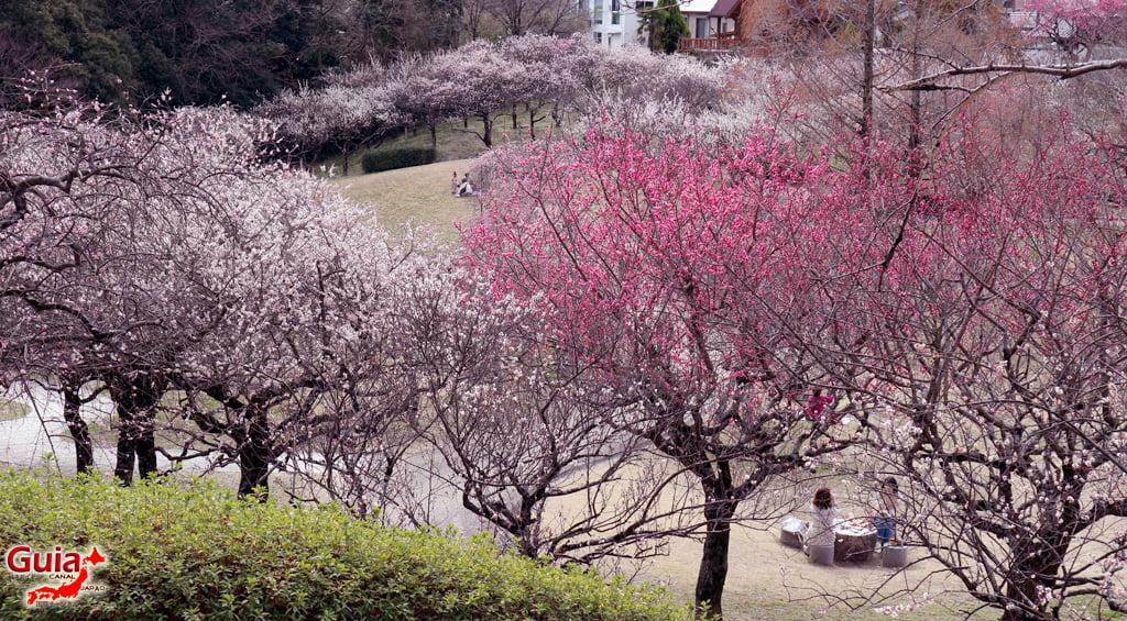 Hirashiba Park - Ume (Plum Blossom Festival) 30