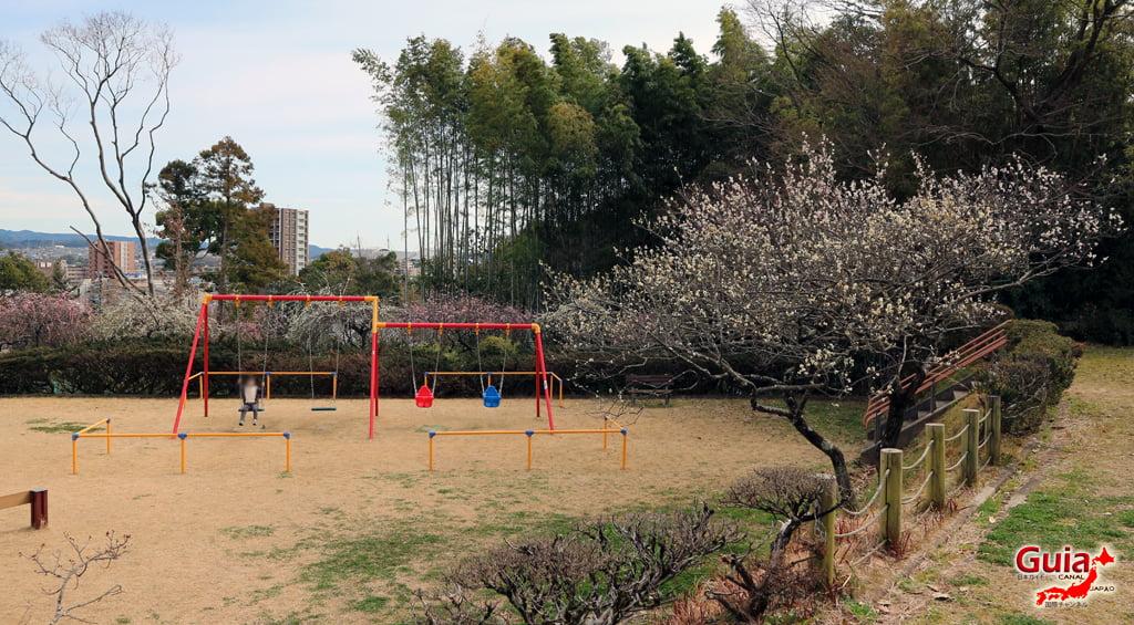Parque Hirashiba - Ume (Festival de la flor del ciruelo) 32