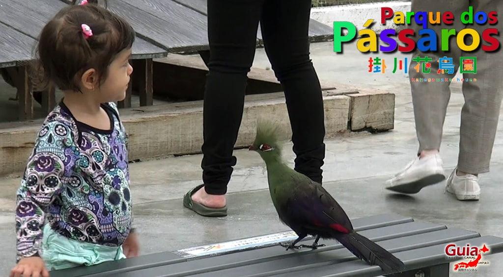 Photo Gallery de Estrangeiros nos Zoológicos do Japão 24