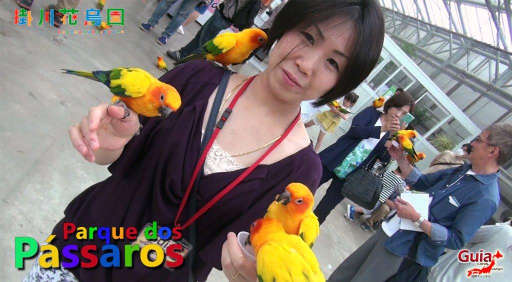 KakegawaKachouen - Bird Park - Galería de fotos 28