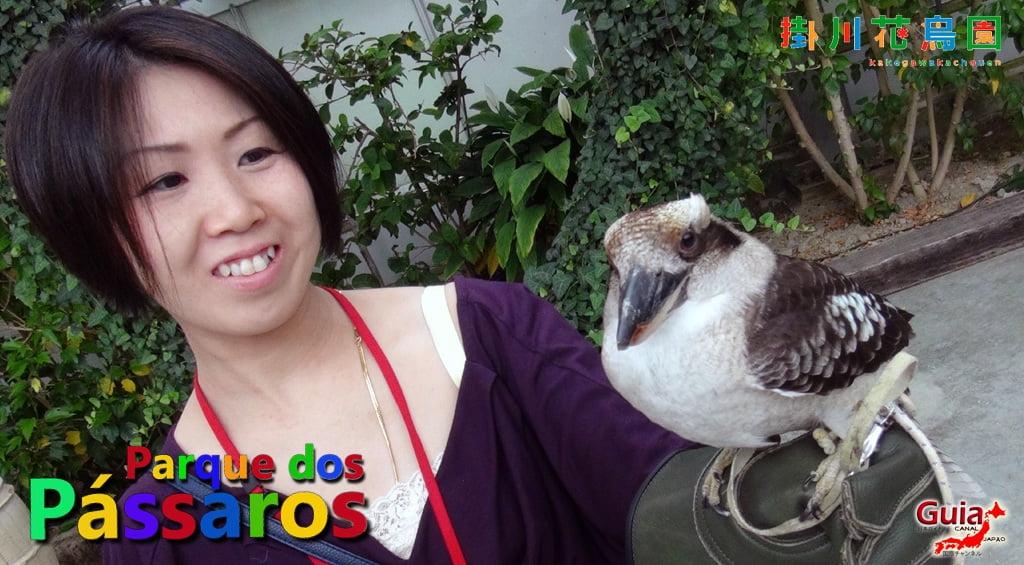 KakegawaKachouen - Bird Park - Galería de fotos 31