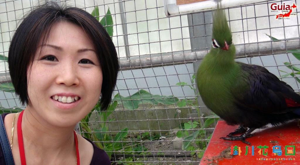 KakegawaKachouen - Bird Park - Galería de fotos 33