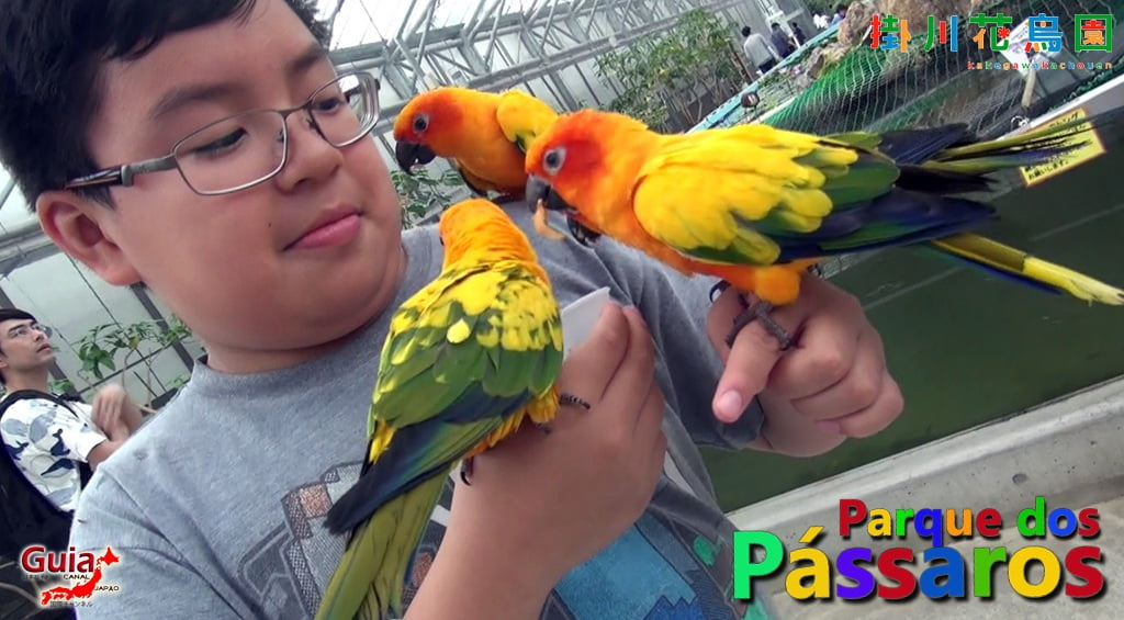 KakegawaKachouen - Bird Park - Galería de fotos 14