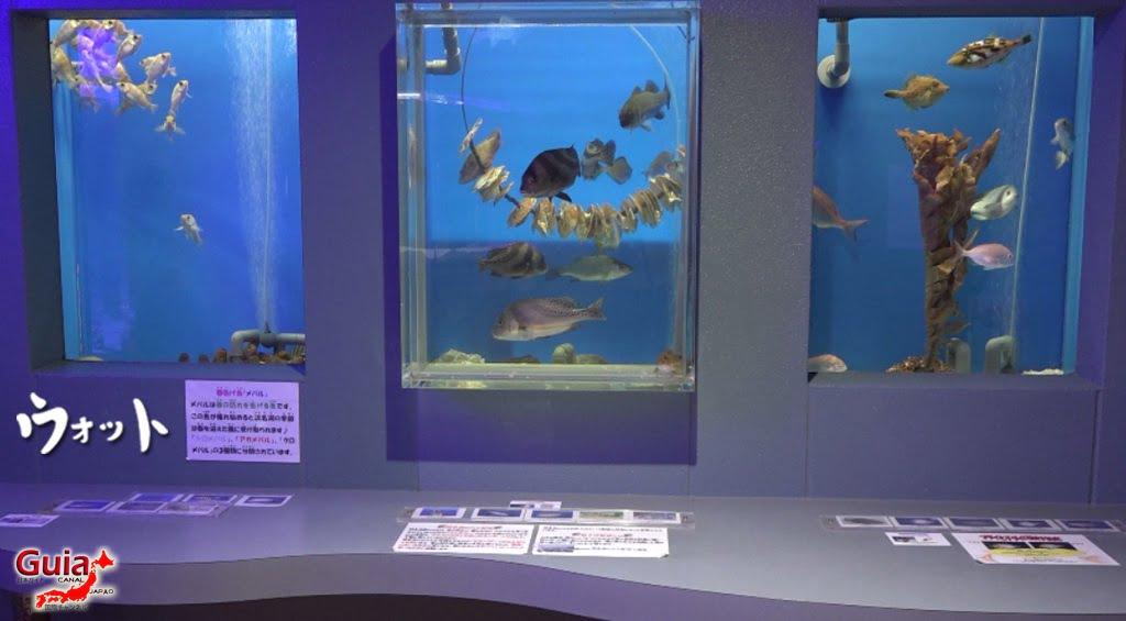 Otto ォ ッ ト - Ulotto Aquarium 6