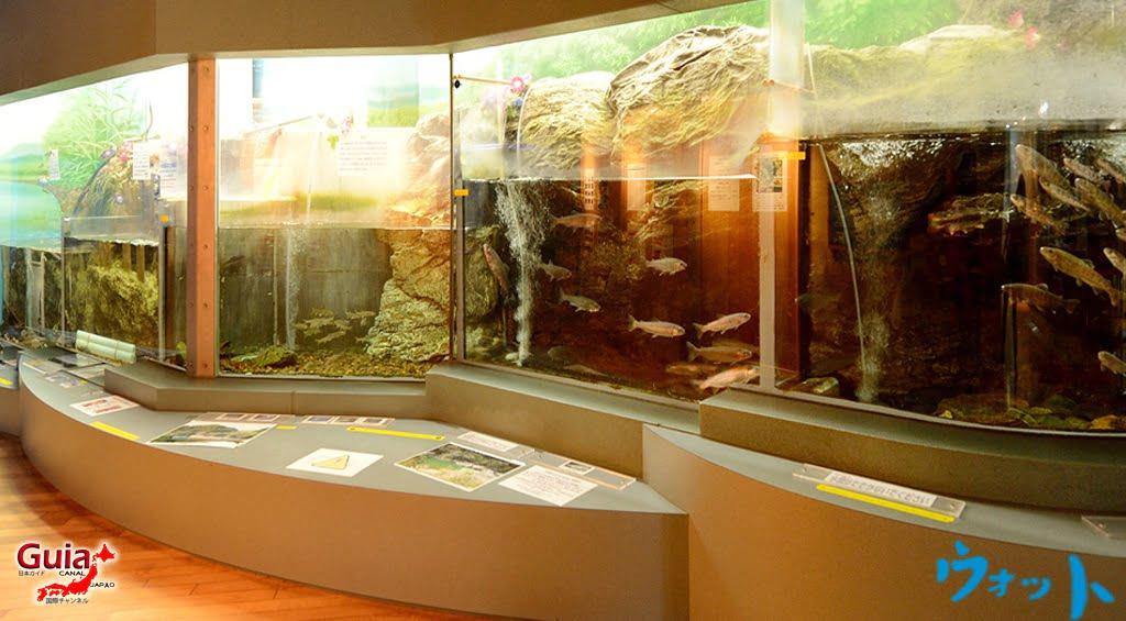 Otto ォ ッ ト - Ulotto Aquarium 7
