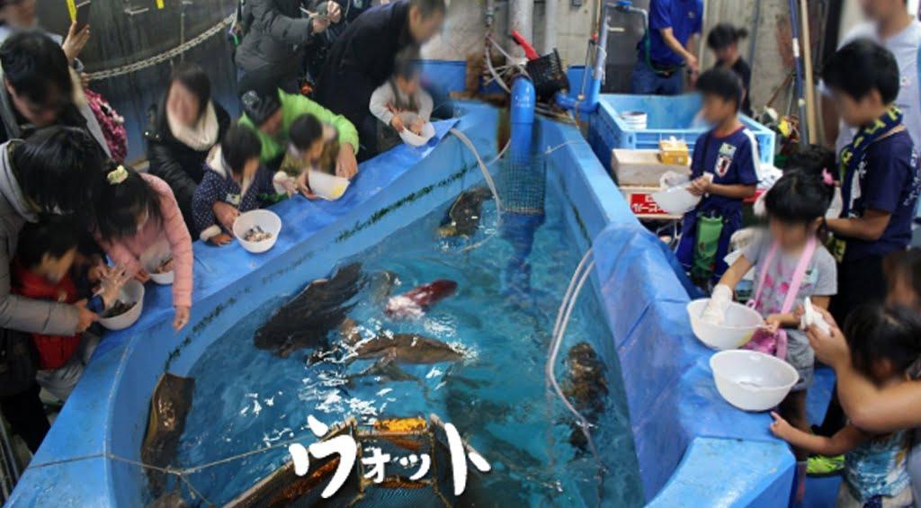 Otto ォ ッ ト - Ulotto Aquarium 12