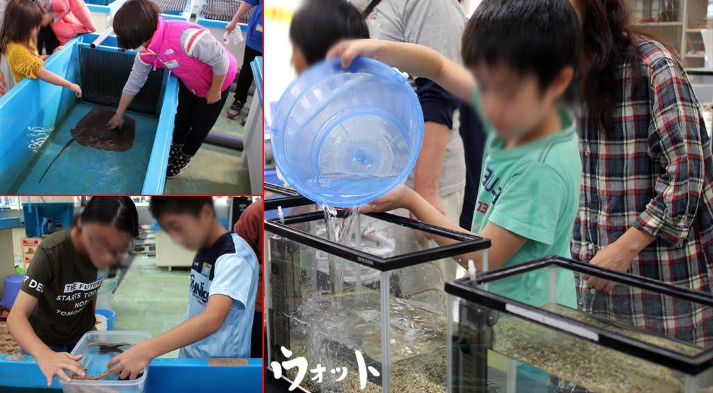Otto ォ ッ ト - Ulotto Aquarium 13