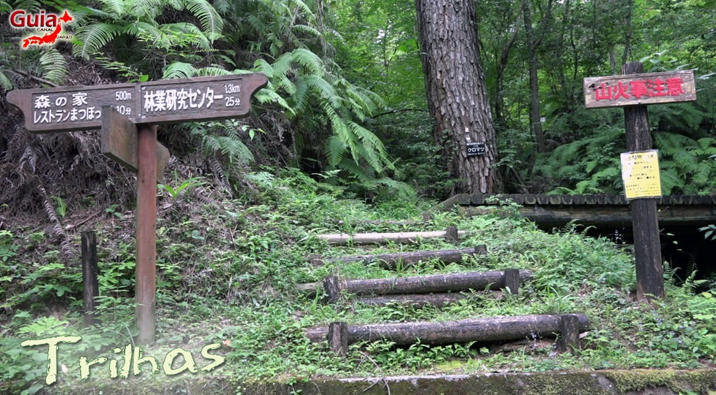 Hamakita Parque Florestal - Hamamatsu 4