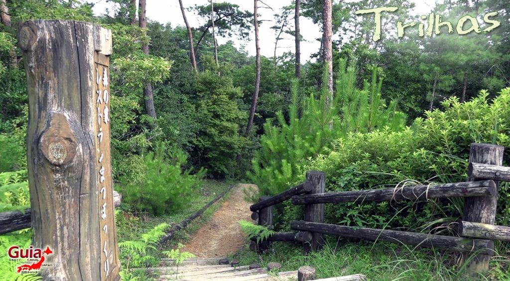 Hamakita Parque Florestal - Hamamatsu 5