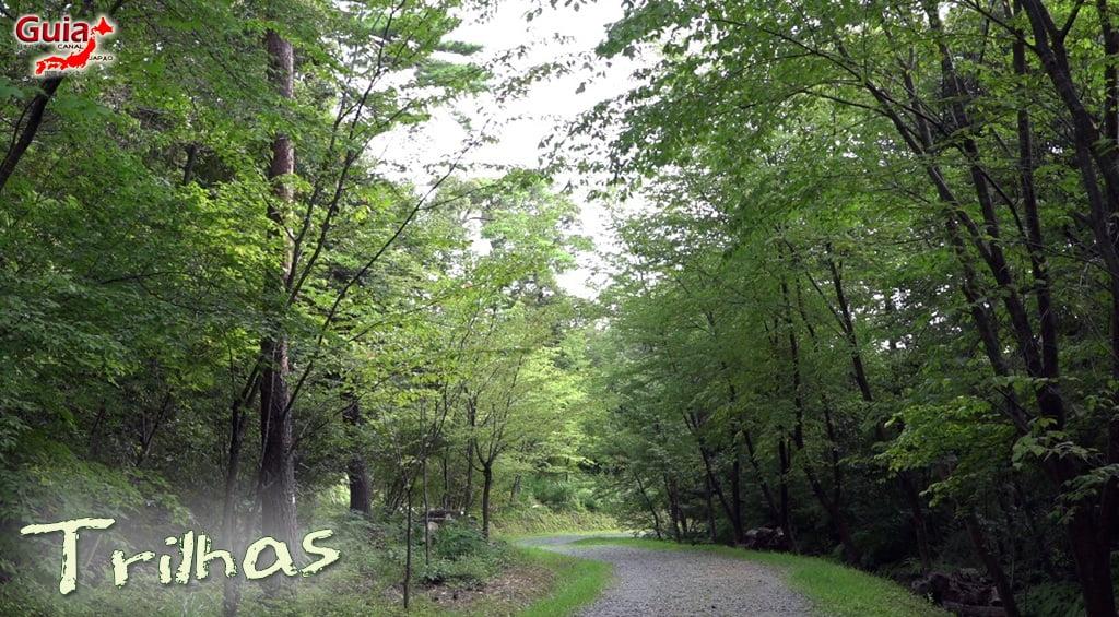 Hamakita Parque Florestal - Hamamatsu 11