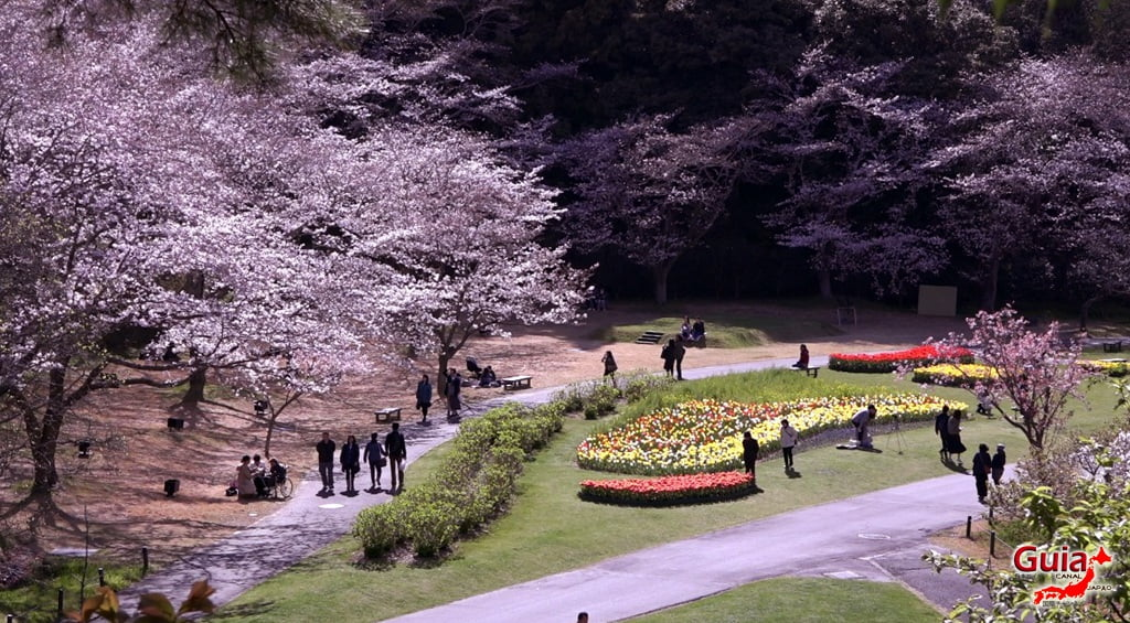 Parque de flores Hamamatsu - Parque de flores 50