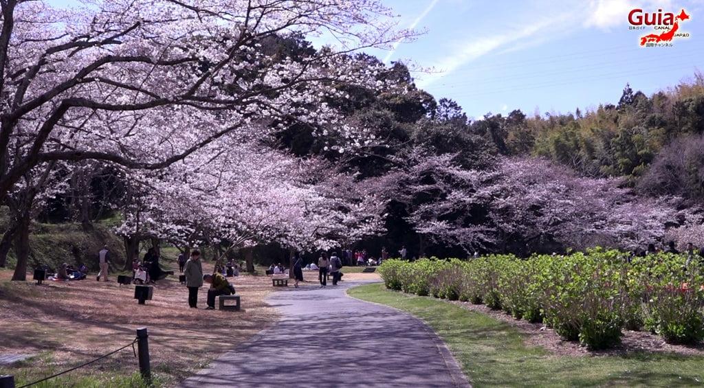 Parque de flores Hamamatsu - Parque de flores 51