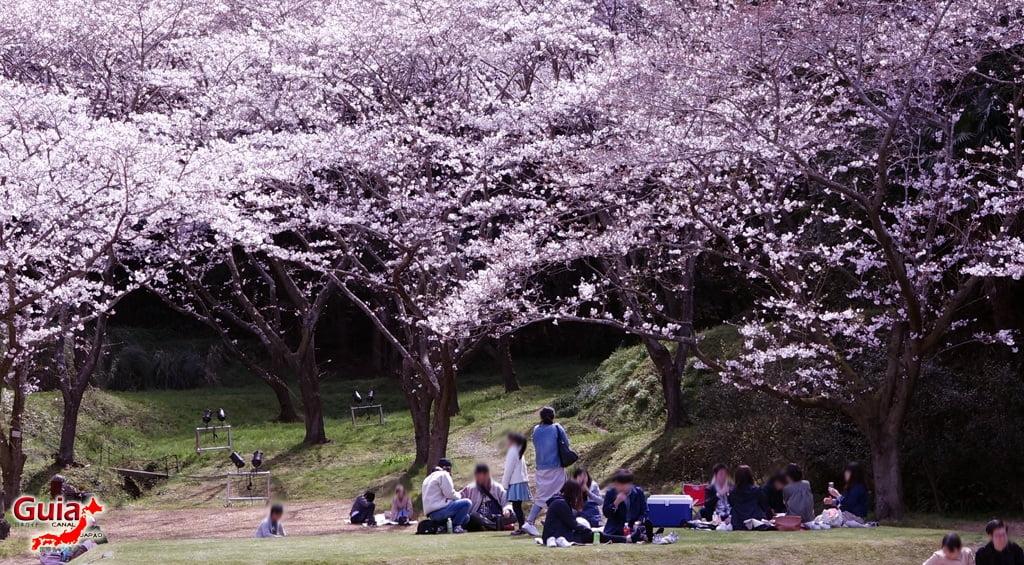 Parque de flores Hamamatsu - Parque de flores 60