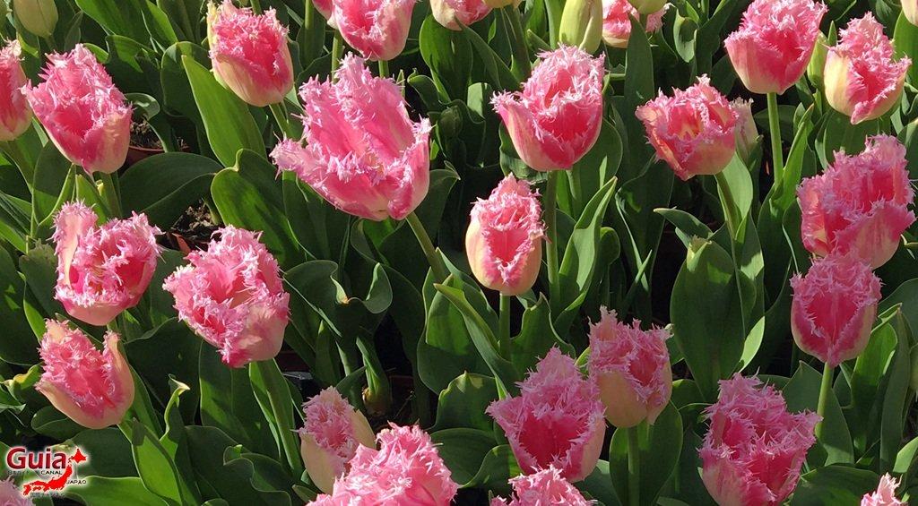 Parque de flores Hamamatsu - Parque de flores 69