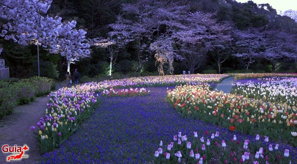 Parque de flores Hamamatsu - Parque de flores 73