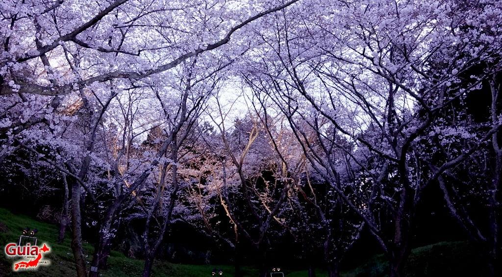 Parque de flores Hamamatsu - Parque de flores 74